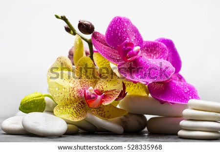 White spa stones with orchid on gray background #528335968