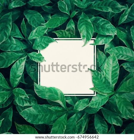 White space with green leaves background design with white paper.Flat lay.Top view of leaf.Nature concepts - Shutterstock ID 674956642