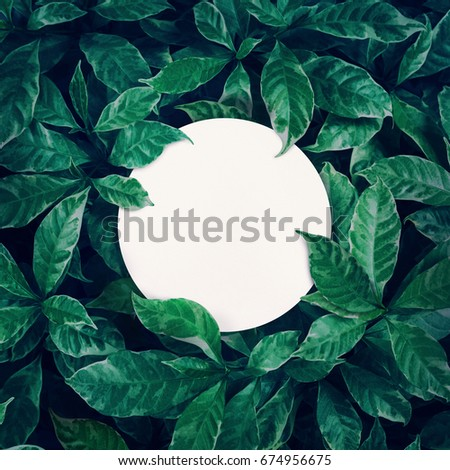 White space with green leaves background design with white paper.Flat lay.Top view of leaf.Nature concepts - Shutterstock ID 674956675