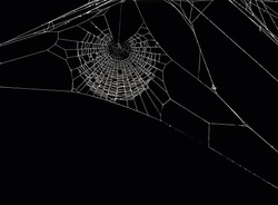White spider's net isolated on a black background.