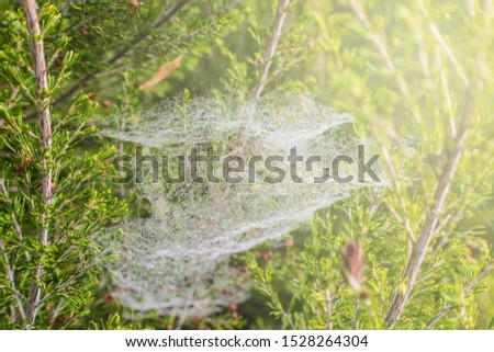 white spider web on vegetation in the forest #1528264304