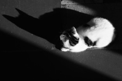 White spotted cat resting on the floor. Strong moonlight and shadows of her body. BW photo