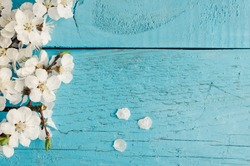 White spring cherry blossom on blue rustic wooden table. Springtime flowers on vintage background with place for text. Mothers Day concept. Mother's gift. Top view. Copy space.