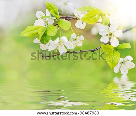 white spring flowers on a tree branch over water waves and green bokeh background close-up