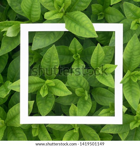 White square frame on green leaves. Blank for advertising card or invitation. Nature concept. Summer background. #1419501149