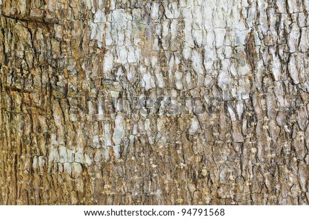 White stained on the bark background