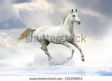 white stallion in snow