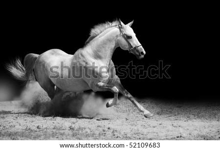white stallion on black