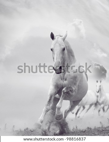white stallions in dust