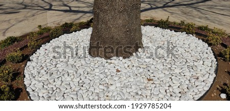 White stones around a tree in a park Stok fotoğraf ©