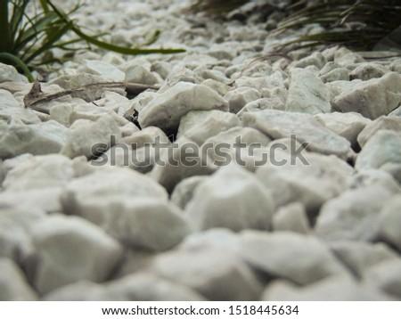 White stones ground with vegetation