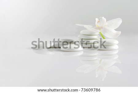 White stones with white orchid flower