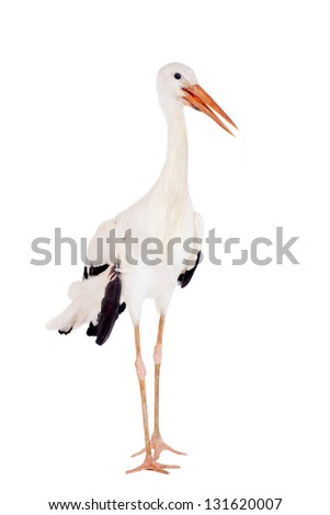 White Stork - Ciconia ciconia. Isolated on white. #131620007