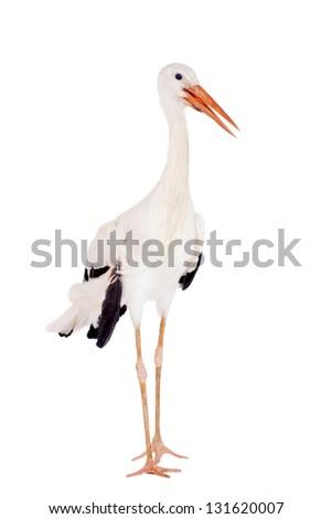 White Stork - Ciconia ciconia. Isolated on white. #131620007