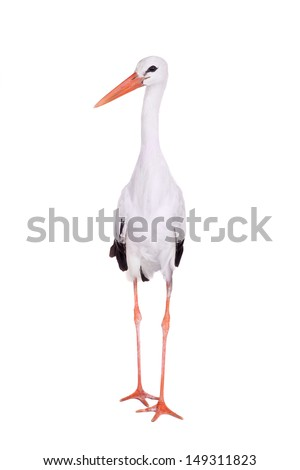 White Stork - Ciconia ciconia. Isolated on white. #149311823