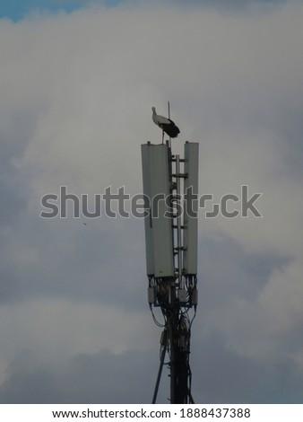 White stork on the connexion pole in Marrakech, Morocco. Photo stock ©
