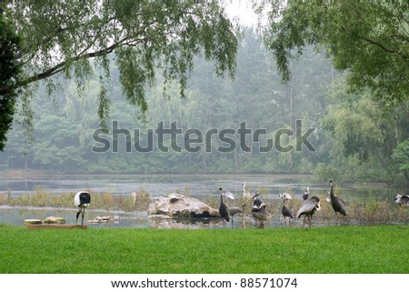 White storks and gray cranes on the shore of lake, a horizontal picture