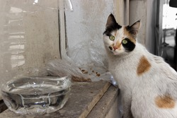 White stray cat eats cat food and drinks water in front of a door. The cat has brown and black spots on its fur