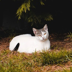 white stray cat on the street