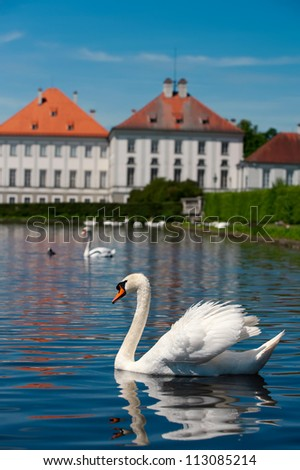White swan with reflection, Nymphenburg, Munchen, Germany