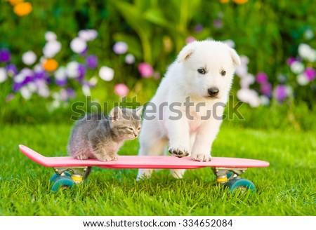 White Swiss Shepherd`s puppy and tabby kitten on skateboard