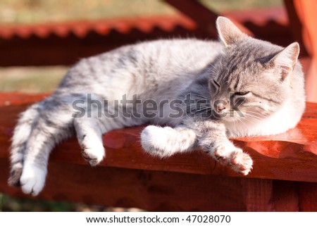 white tabby cat lying down on bench