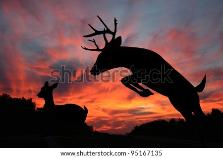 White tail buck jumping ravine with doe in the background make striking silhouettes against an amazing sunset in the background.