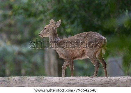 White tailed deer in the forest #796642540
