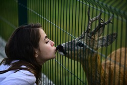 White-tailed roe in zoo cage. Deer bambi and wild animals concept. Girl feeds a fawn carpeolus in park
