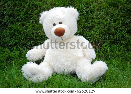 white teddy-bear