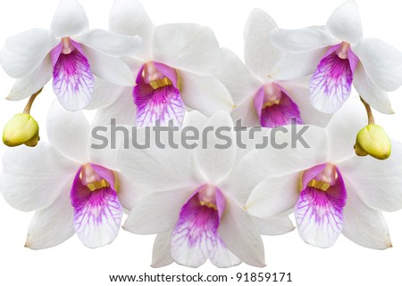 white thai orchids flowers.