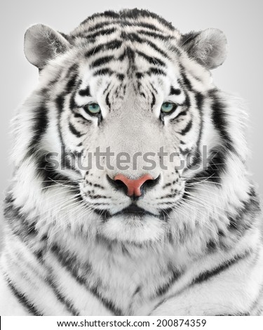 White tiger #200874359