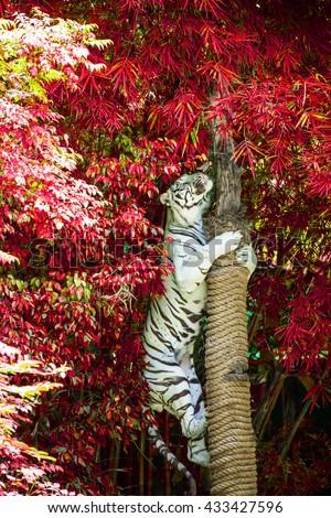 white tiger #433427596