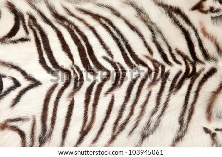 White tiger fur background