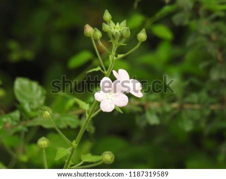 Free photos bunch of white tiny flowers avopix white tiny flowers and bunch of green leafs leaves 1187319589 mightylinksfo