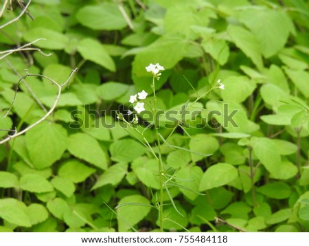 White tiny flowers and bunch of green leafs leaves ez canvas white tiny flowers and bunch of green leafs leaves mightylinksfo