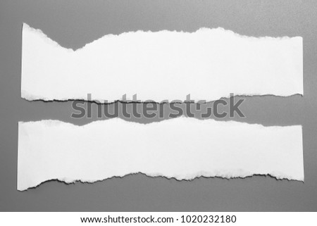 white torn paper on gray background. collection paper rip #1020232180