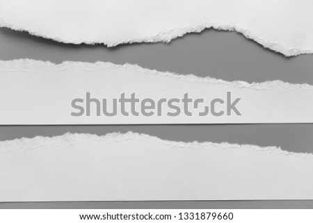 white torn paper on gray background. collection paper rip #1331879660