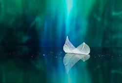 White transparent leaf on mirror surface with reflection on green background macro. Abstract artistic image of ship in waters of lake. Template Border natural dreamy artistic image for traveling