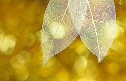 White transparent skeleton leaves with beautiful texture on a golden shiny abstract background blurred close-up macro. Romantic gentle artistic image, circular bokeh.
