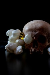 White tulips and human skull on black background