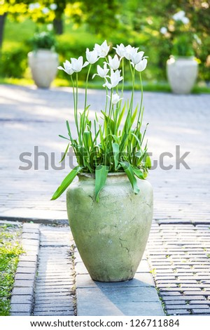 white tulips flowers in a ceramic vase decorating city  garden