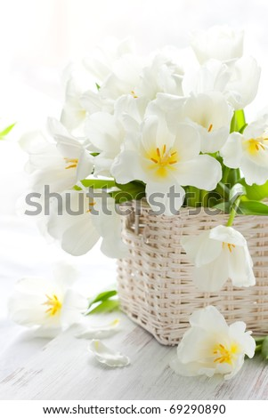 white tulips in a basket on the wooden table - stock photo