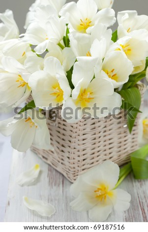 white tulips in a basket on white background