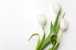White Tulips on white background. Top view