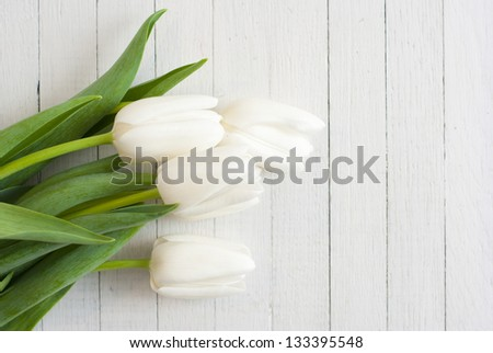 white tulips on white wooden background