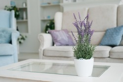 White vase with lavender flowers in the interior decor of the living room in light colors with blue color