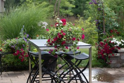 White vincas, red geraniums and red super petunias on a cobalt blue patio table with a stainless steel base invoke an Impressionistic garden, with clematis climbing up the arbor