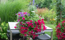 White vincas, red geraniums and red super petunias on a rectangular patio table with stainless steel base invoking an Impressionistic garden, with clematis climbing up the arbor