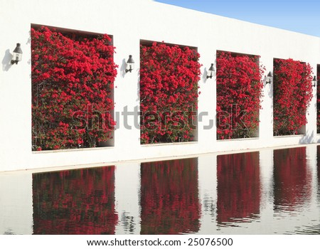 White wall with bougainvillea trees and lanterns reflecting in water
